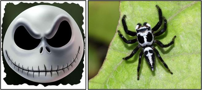 nightmare before christmas spider, jack skellington, halloween costume ideas