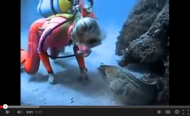 Diver Becomes Best Friends With a Moray Eel