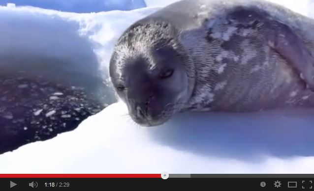 Baby Seal Gives Swimming Lessons the 'Seal of Disapproval'