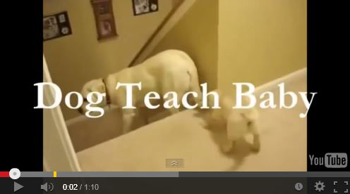Video: Dogs vs Cats Teaching Their Babies to Go Down Stairs