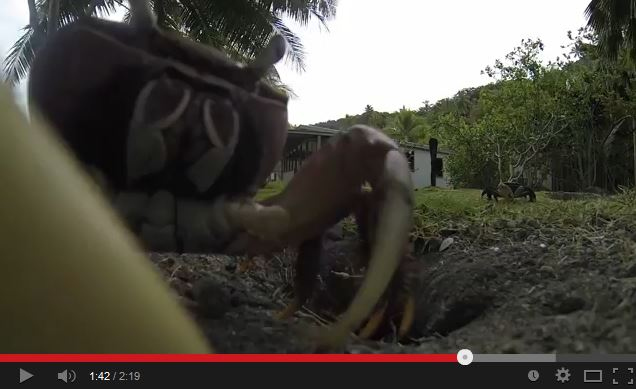 Kleptomaniac Crab Steals GoPro Camera