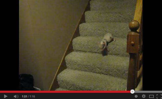 Video: Tiny Pig Goes Down Stairs After Oatmeal