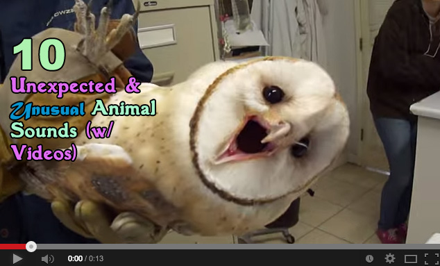 What does the ___ say? 10 Unexpected & Unusual Animal Sounds (videos)