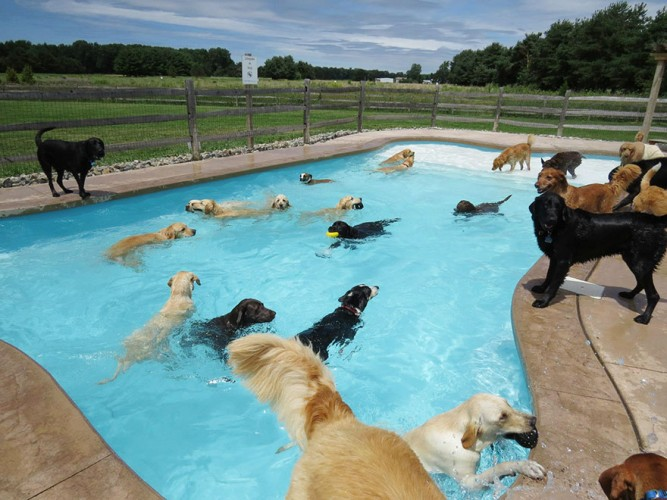 dog pool party, dog pool pawty, lucky puppy (1)