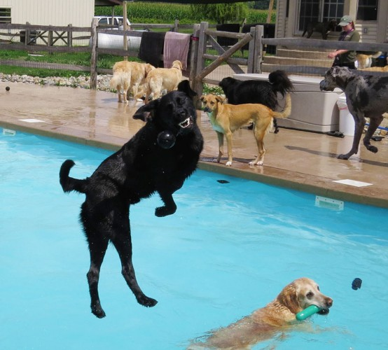 dog pool party, dog pool pawty, lucky puppy (4)
