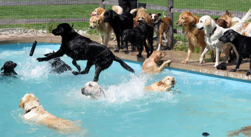 Doggy Day Care Hosts Epic Dog Pool PAWTY!