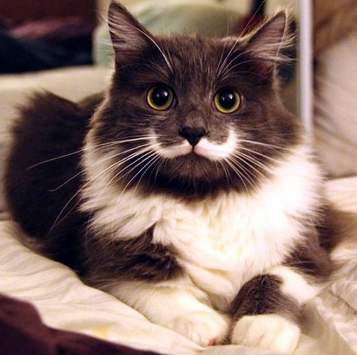 pictures of cats with unique markings, unique cat markings (5) (4) (10)