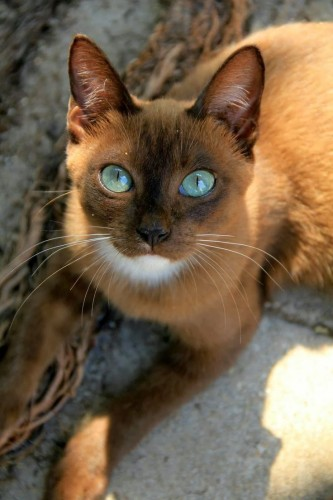 pictures of cats with unique markings, unique cat markings (1)