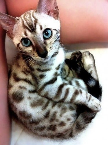 pictures of cats with unique markings, unique cat markings (3)