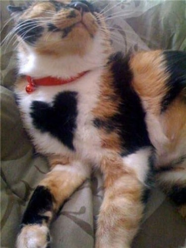 pictures of cats with unique markings, unique cat markings (5) (8)