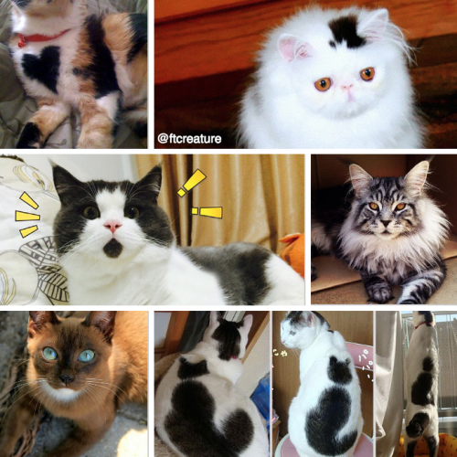 19 Unusual Cat Markings in Photos – Happy #NationalCatDay!