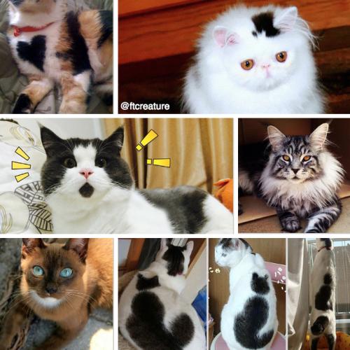 19 Unusual Cat Markings in Photos – Happy #NationalCatDay!