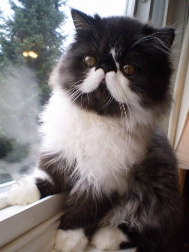 pictures of cats with unique markings, unique cat markings (5) (4) (2)