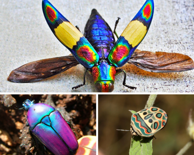 5 of the Most Beautiful Bugs on the Planet