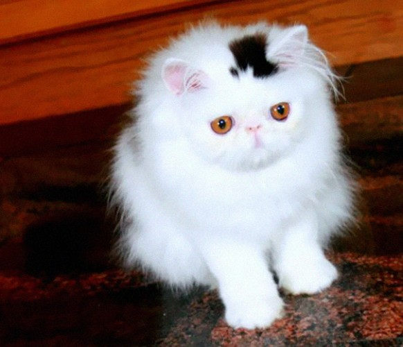 pictures of cats with unique markings, unique cat markings (5) (5)