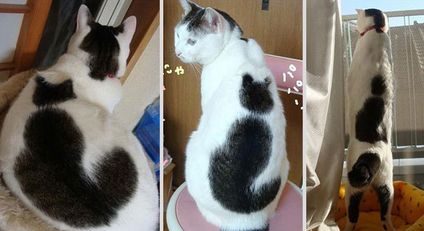 pictures of cats with unique markings, unique cat markings (5) (2)