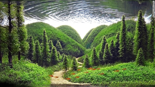 aquascape, aquascaping, underwater forest (8)