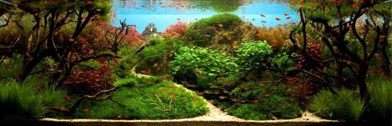 aquascape, aquascaping, underwater forest (9)