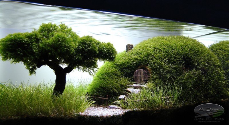 11 Mind-blowing Aquascapes That Will Enchant Your Socks Off