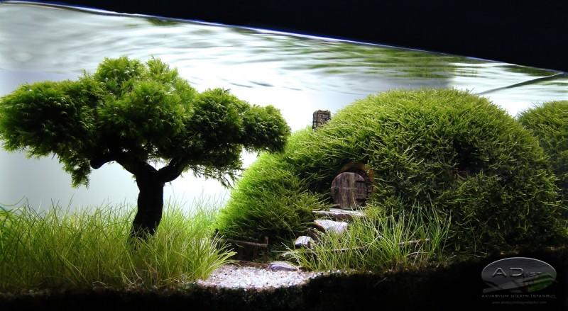 aquascape, aquascaping, underwater forest (11)