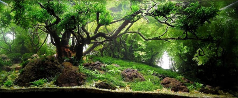 aquascape, aquascaping, underwater forest (5)