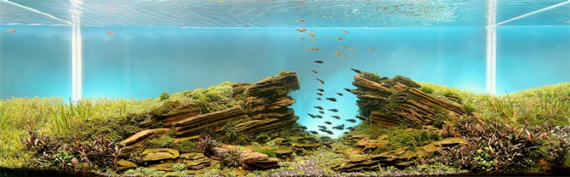 aquascape, aquascaping, underwater forest (6)