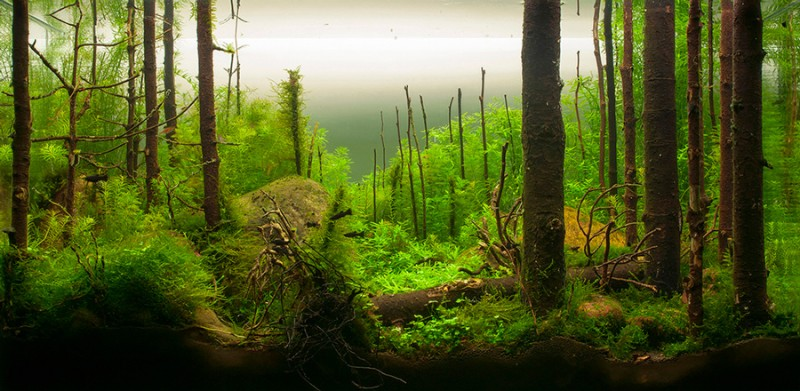 aquascape, aquascaping, underwater forest (7)