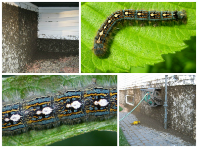 Tent Caterpillars Throw EPIC Ugly Christmas Sweater Parties