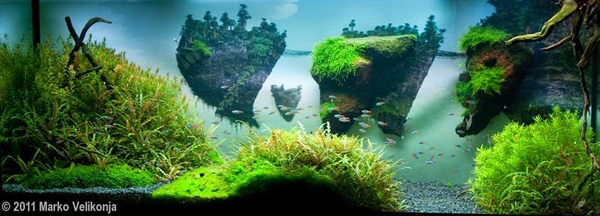 aquascape, aquascaping, underwater forest (3)