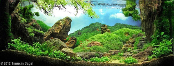 aquascape, aquascaping, underwater forest (2)