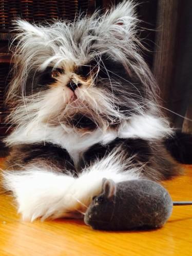 hairy cat (2)