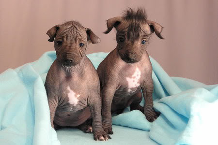 Five Hairless Dog Breeds: Man's Best (Naked) Friends ...