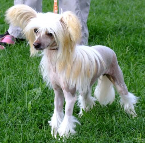 Cute Hairy Dog Breeds