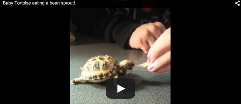 WATCH: Tiny Healthy Tort, I Dub Thee Sir Chomps A lot
