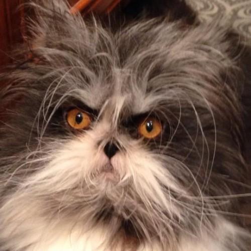 hairy cat (4)