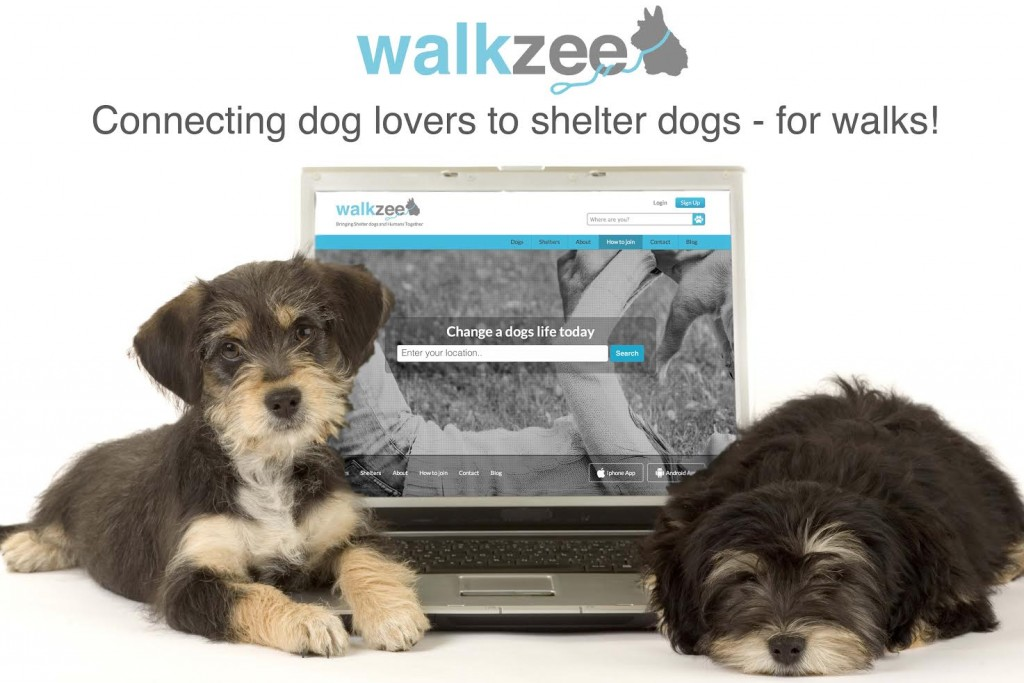walkzee, walk a shelter dog program