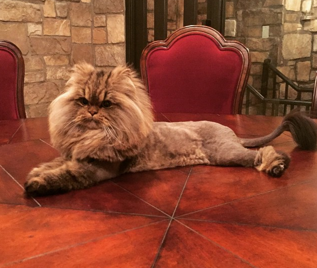 All Hail Smushball The Kitty Cat Queen Of Instagram