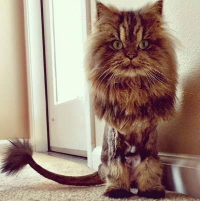 All Hail Smushball, the Kitty Cat Queen of Instagram.