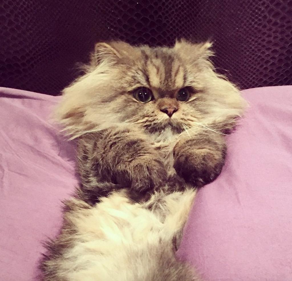 smushball cat (5)