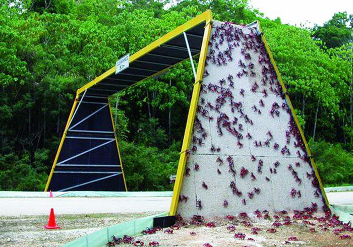 christmas island crab bridge, animal bridge, wildlife crossing