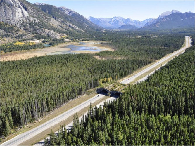 banff-national-park-alberta-animal-bridge