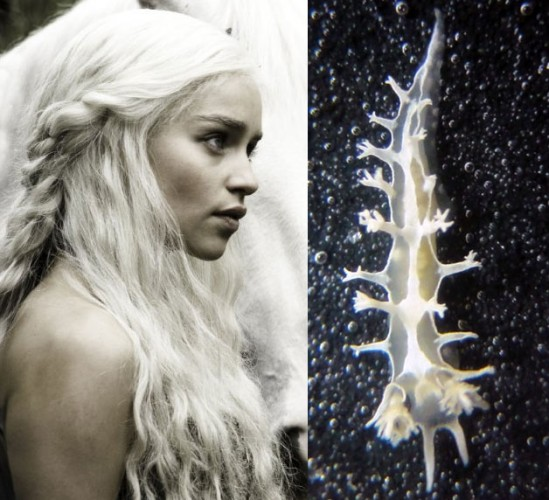 Tritonia khaleesi: Daenerys Targaryen Gets Nudified!