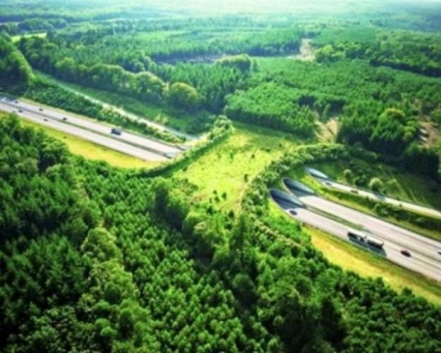 animal bridge, wildlife crossing