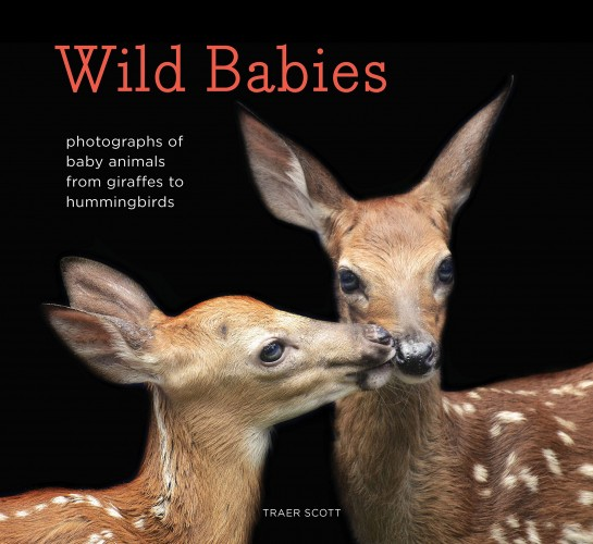 Wanna Win Some Wild Babies?